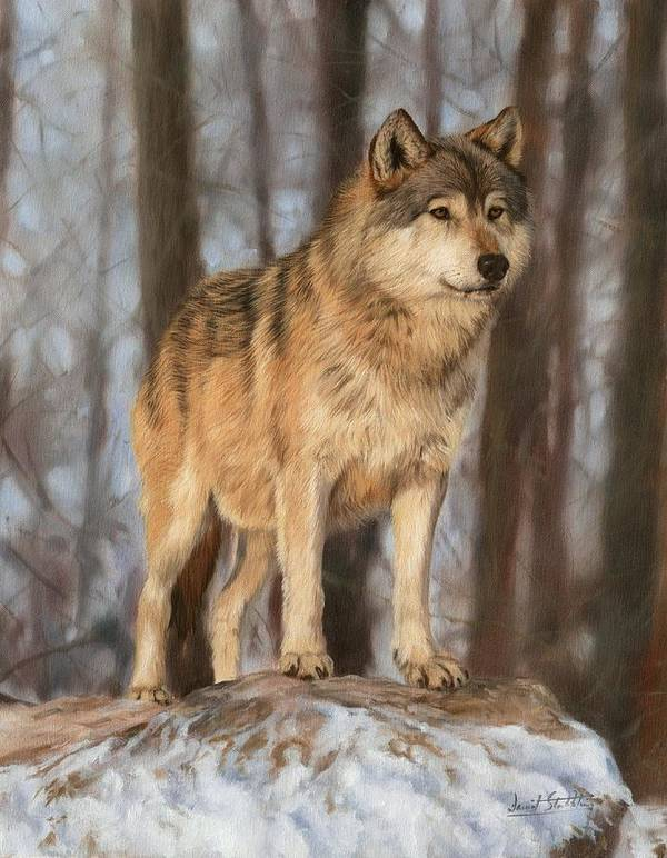 Wolf Poster featuring the painting Grey Wolf by David Stribbling