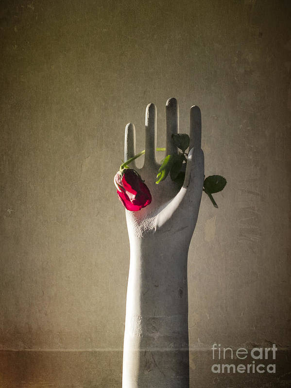 Hand Poster featuring the photograph Hand Holding Rose by Terry Rowe