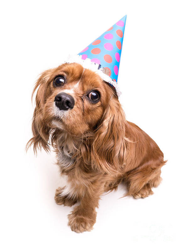 Dog Poster featuring the photograph Happy Birthday Puppy by Edward Fielding