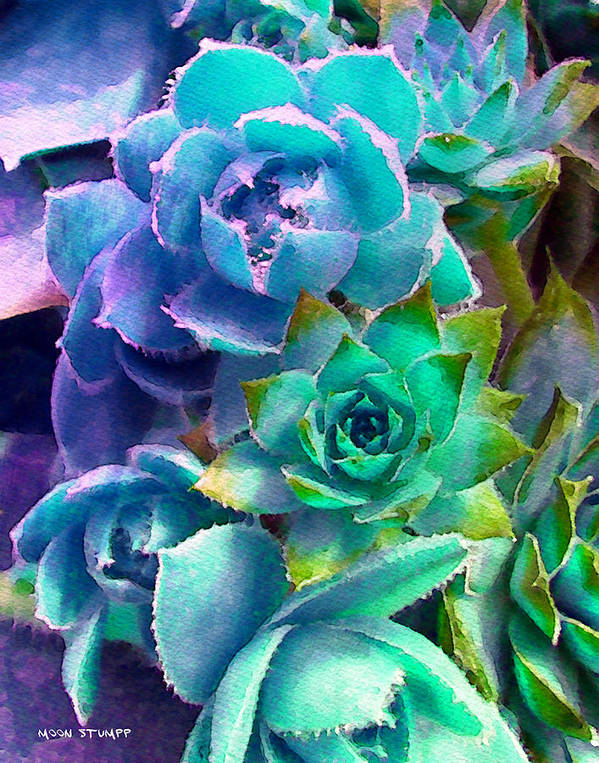Hens And Chicks Photography Poster featuring the photograph Hens And Chicks Series - Deck Blues by Moon Stumpp