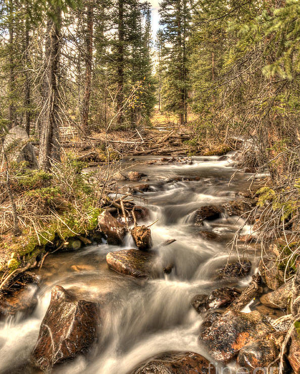 Stream Poster featuring the photograph Hidden Forest Treasure by Earl Nelson