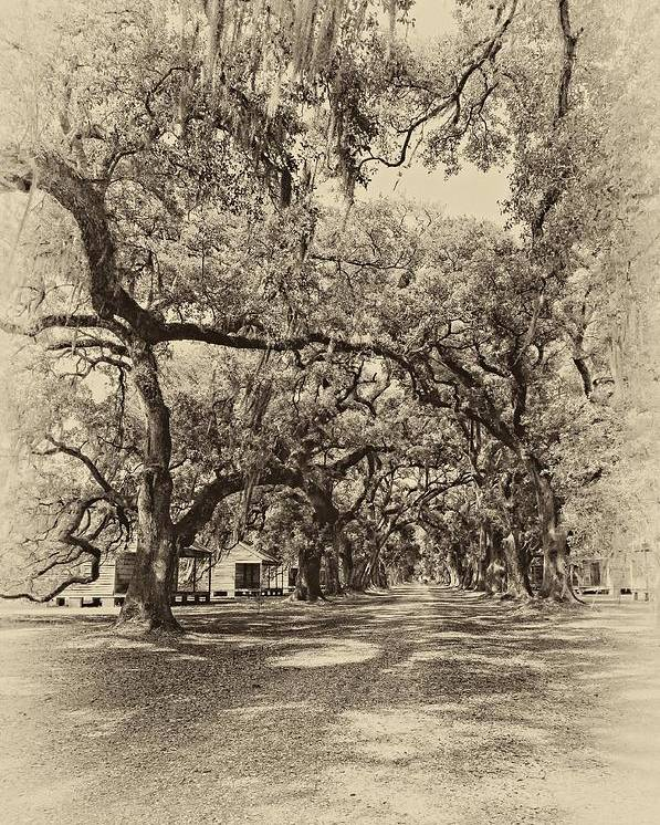 Evergreen Plantation Poster featuring the photograph Historic Lane Antique Sepia by Steve Harrington