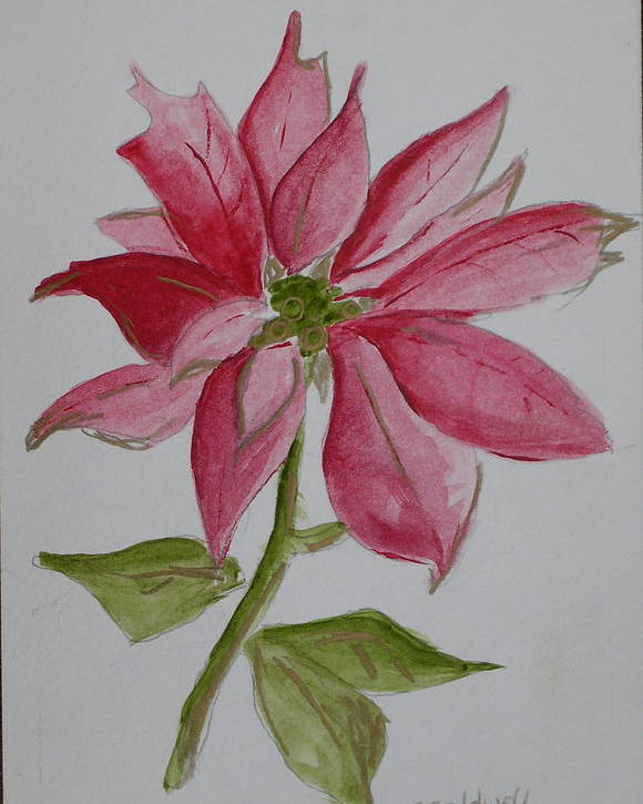 Flower Christmas Poster featuring the painting Holiday Flower by Patricia Caldwell