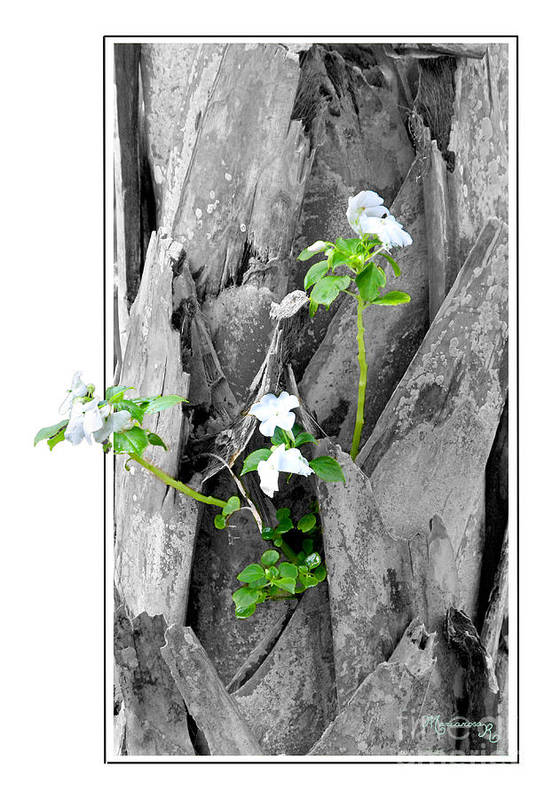 Flora Poster featuring the photograph Hope... From Decay New Growth by Mariarosa Rockefeller
