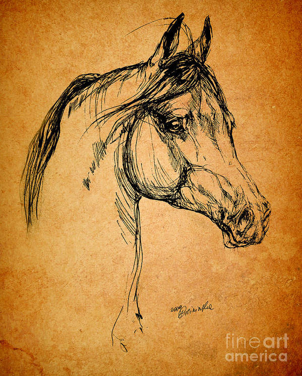 Horse Poster featuring the drawing Horse Drawing by Angel Ciesniarska