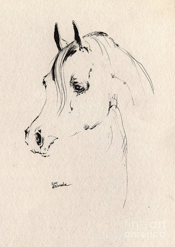 Horse Poster featuring the drawing Horse Head Sketch by Angel Ciesniarska