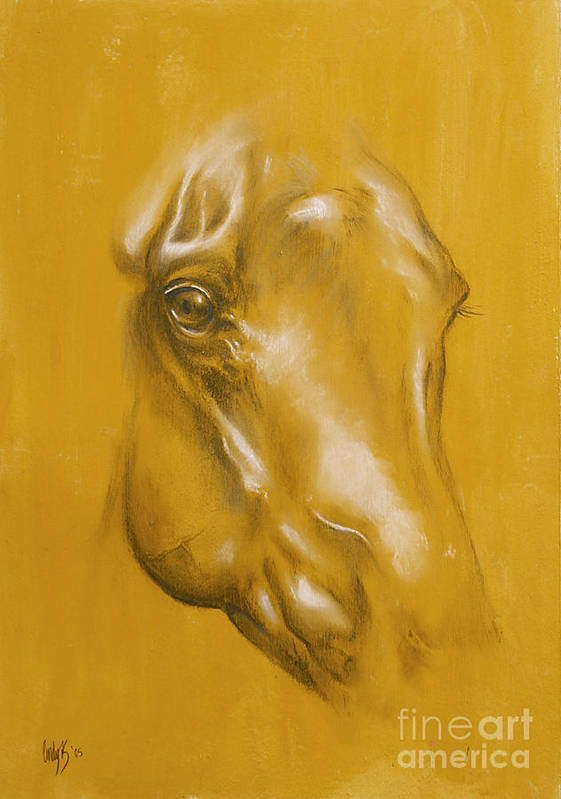Horse Poster featuring the drawing Horse Portrait by Tamer and Cindy Elsharouni
