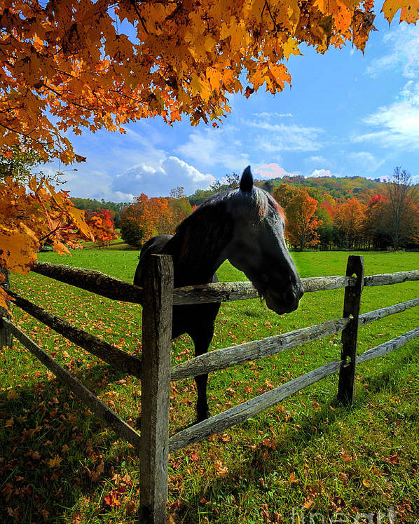Horse Poster featuring the photograph Horse Under Tree By Fence by Dan Friend