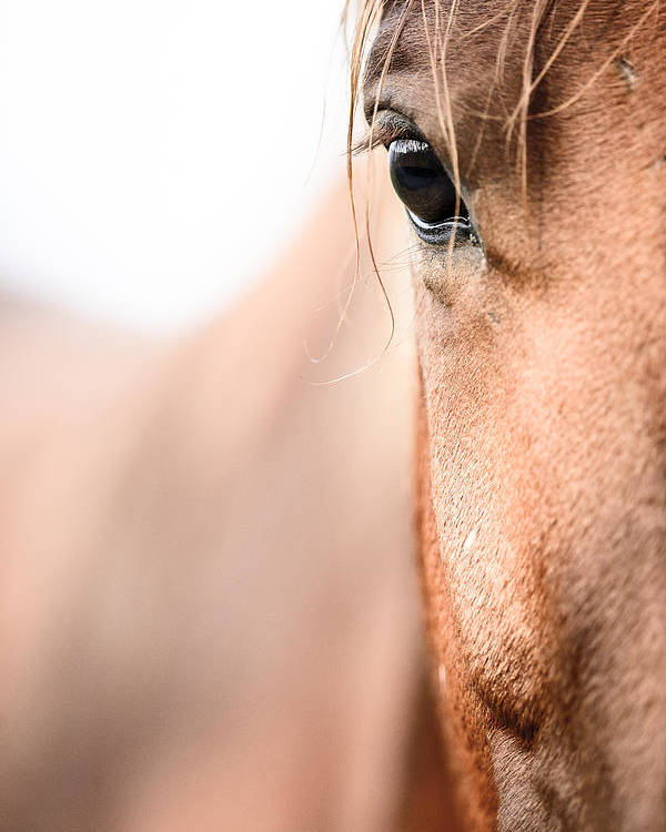 Highkey Poster featuring the photograph Horses Eye No. 2 by Andy-Kim Moeller