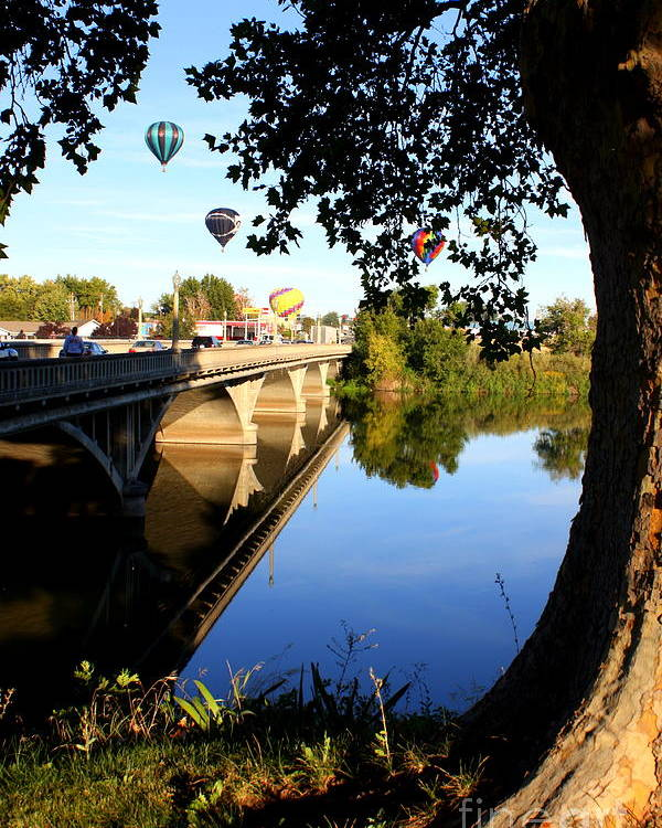 Prosser Poster featuring the photograph Hot Air Balloons Through Tree by Carol Groenen