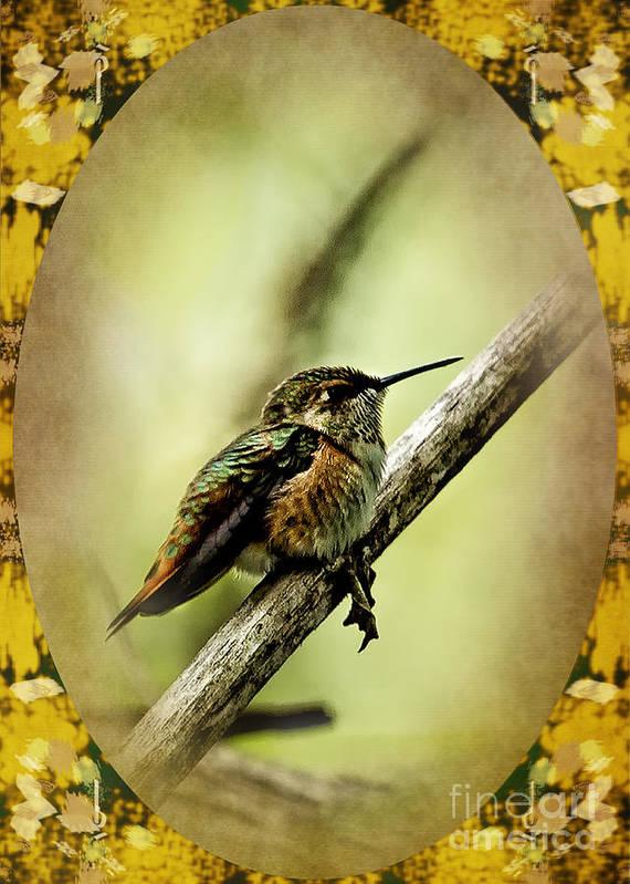 Hummingbird Poster featuring the photograph Hummingbird Noveau by Belinda Greb
