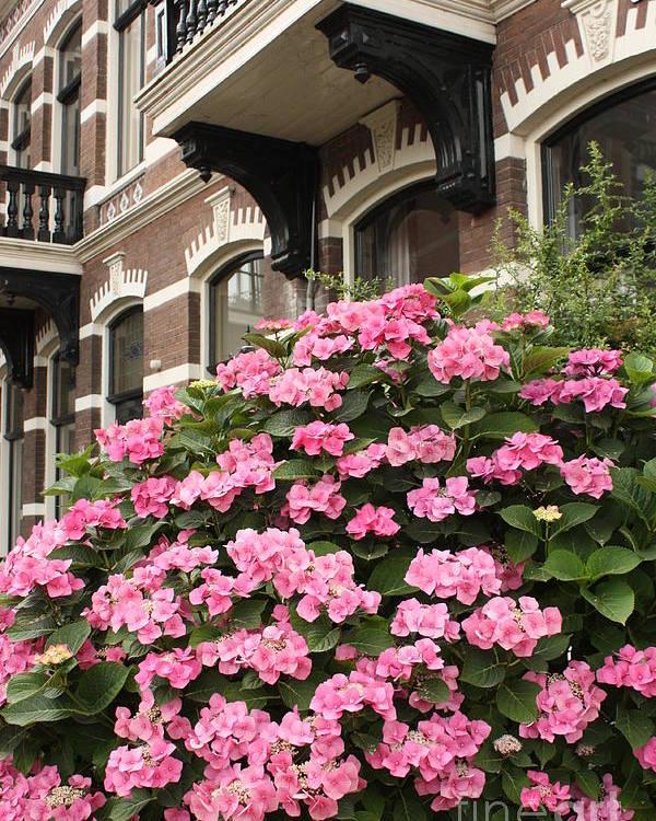 Hydrangeas Poster featuring the photograph Hydrangeas In Holland by Carol Groenen