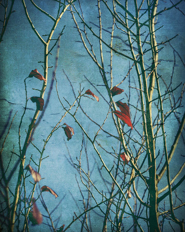 Trees Poster featuring the photograph I Can't Go Just Yet by Laurie Search