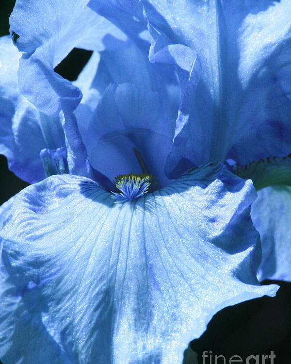 Flower Poster featuring the photograph Iris by Linda Walker