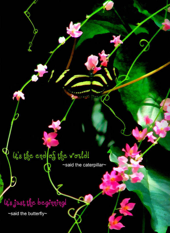 Butterfly Poster featuring the photograph It Is The Beginning by Poetry and Art