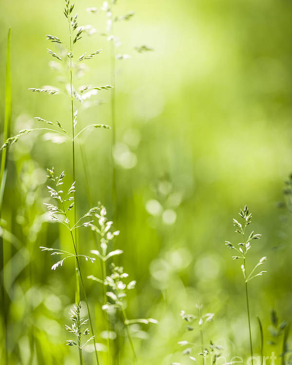 Green Poster featuring the photograph June Green Grass by Elena Elisseeva