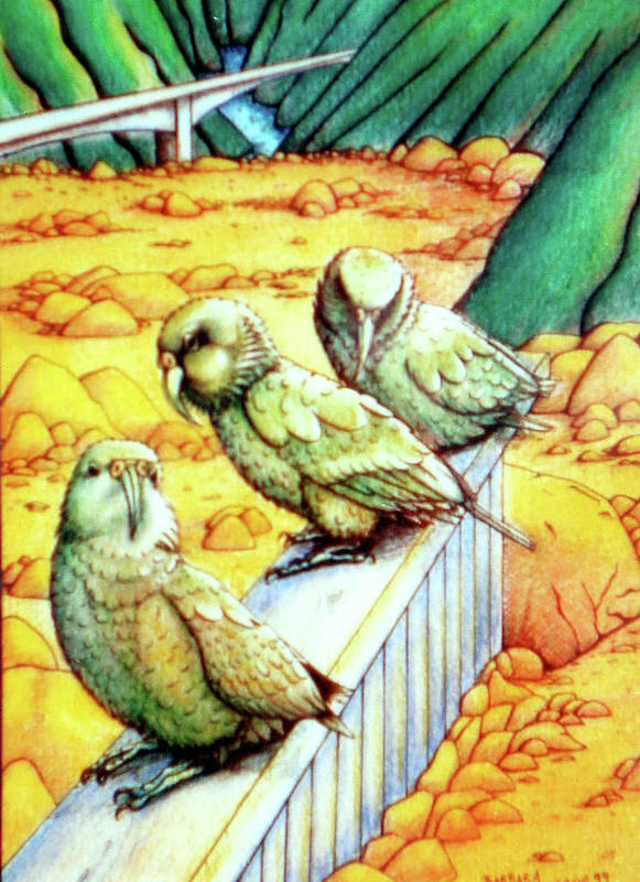 Kea Poster featuring the drawing Kea by Barbara Stirrup