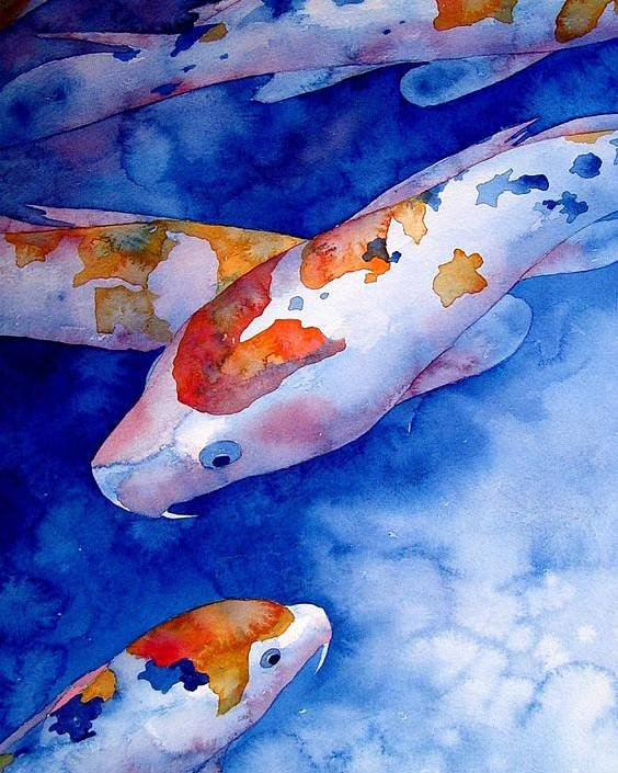 Watercolor Poster featuring the painting Koi by Robert Hooper