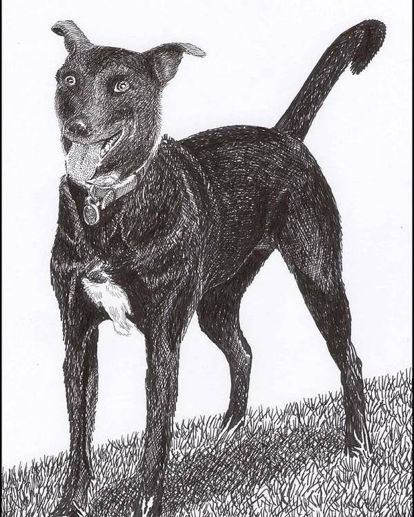 Priced Starting At $ 100.00 To $ 125.00 Framed Prints Of Man�s Best Friend. Framed Pen & Ink Art Of Winer Dogs. Ink Art Of Pets. Art Of Dogs And Cats.sue's Dog Drawn In Pen & Ink. Poster featuring the drawing Here Is Once Own See by Jack Pumphrey