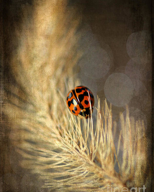 Weed Poster featuring the photograph Ladybird by Darren Fisher