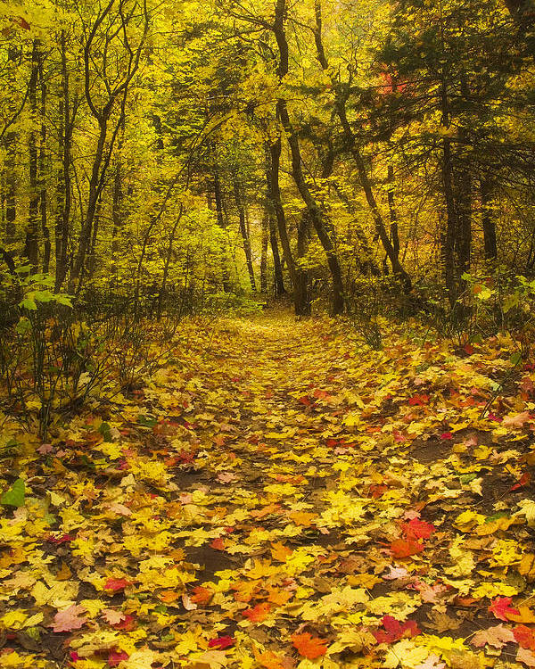 Autumn Poster featuring the photograph Leaving The Way by Peter Coskun