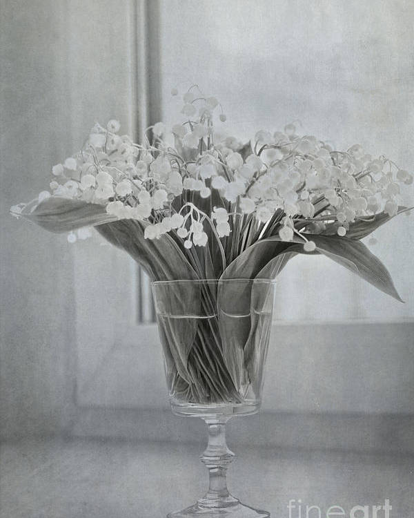Lily Of The Valley Poster featuring the photograph Lily Of The Valley by Elena Nosyreva
