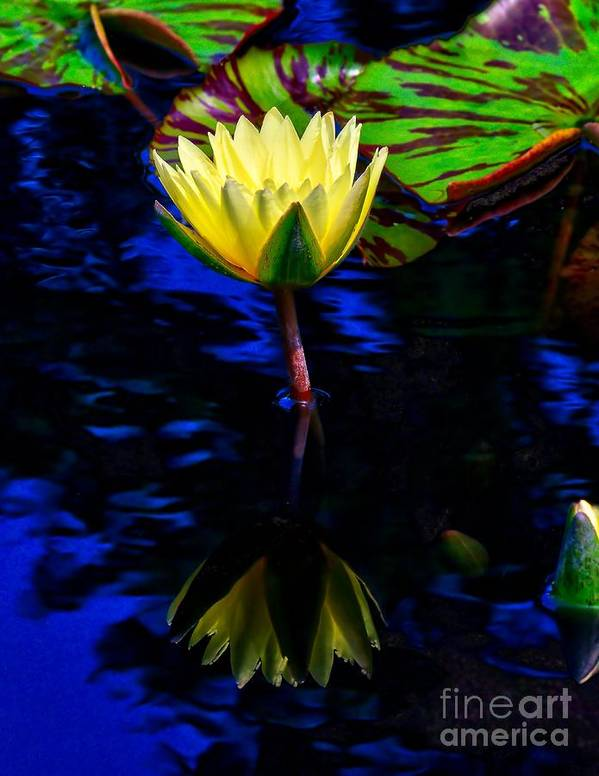Aquatic Poster featuring the photograph Lily Reflection by Nick Zelinsky