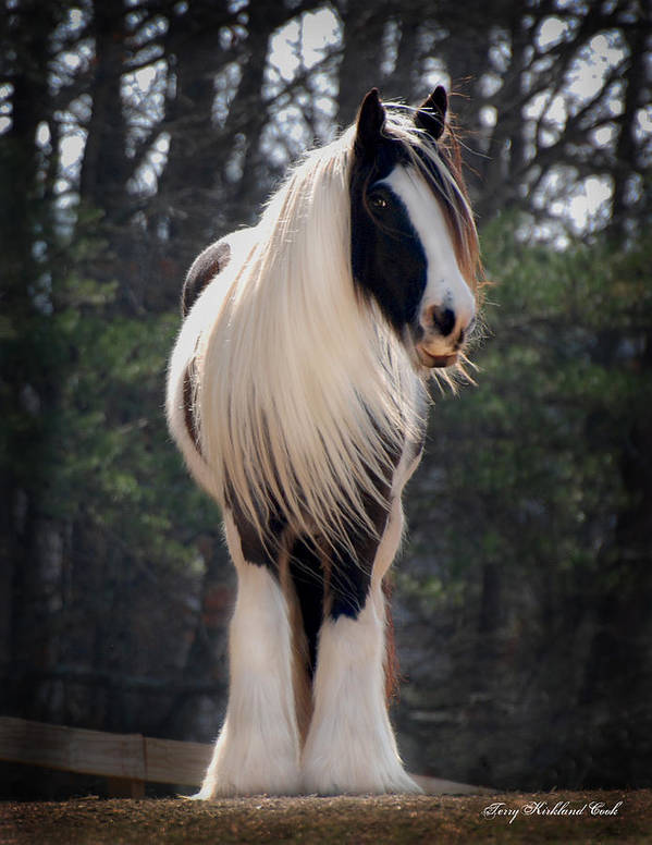 Horse Poster featuring the photograph Lioness Dahlia by Terry Kirkland Cook
