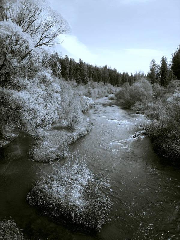 Spokane Poster featuring the photograph Little Spokane River Beauty by Daniel Hagerman