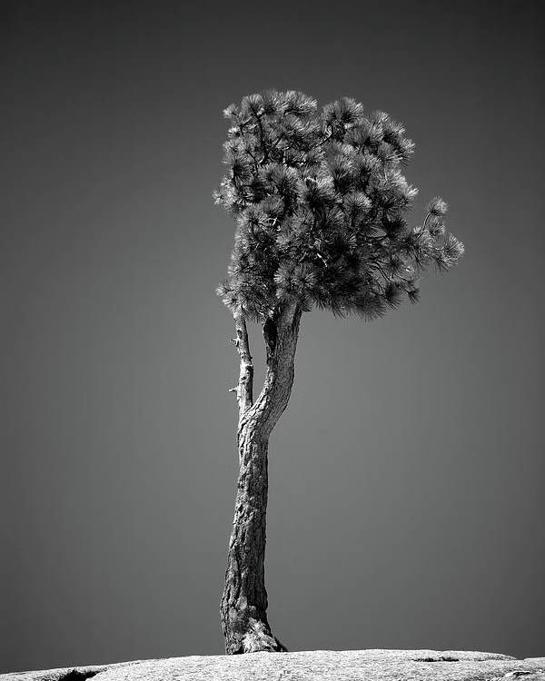 Black & White Poster featuring the photograph Lone Pine II by Peter Tellone