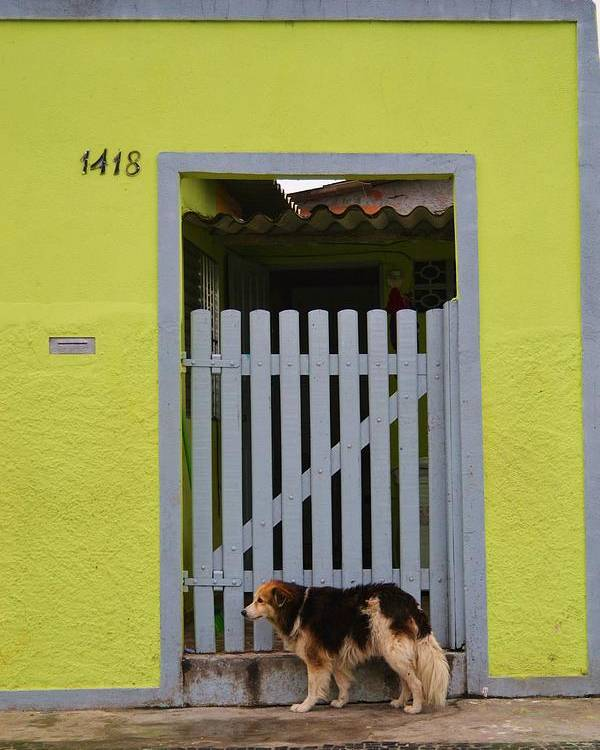 Dog Poster featuring the photograph Lonely Cachorro by Stephanie Guinn