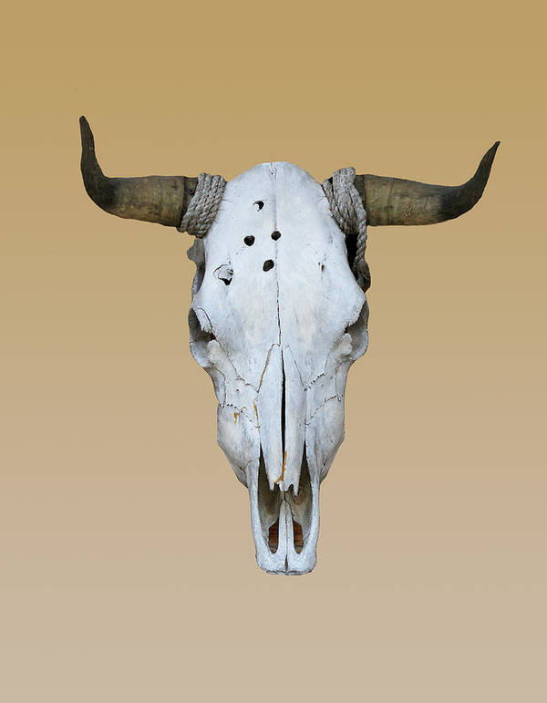 Longhorn Poster featuring the photograph Longhorn Skull by Linda Phelps