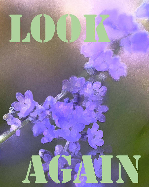 Look Again Poster featuring the photograph Look Again by Pamela Cooper