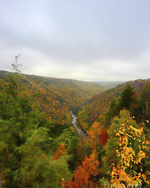 Blackwater River Poster featuring the photograph Looking Downstream At Blackwater River Gorge In Fall by Dan Friend
