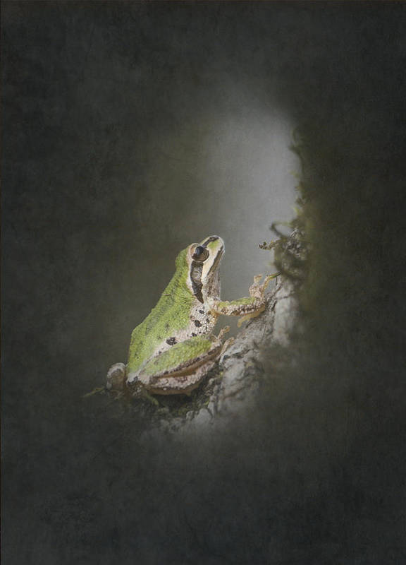 Frog Poster featuring the photograph Looking Up by Angie Vogel