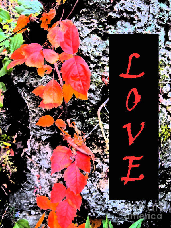 Love Poster featuring the photograph Love Fall Edition by Minding My Visions by Adri and Ray