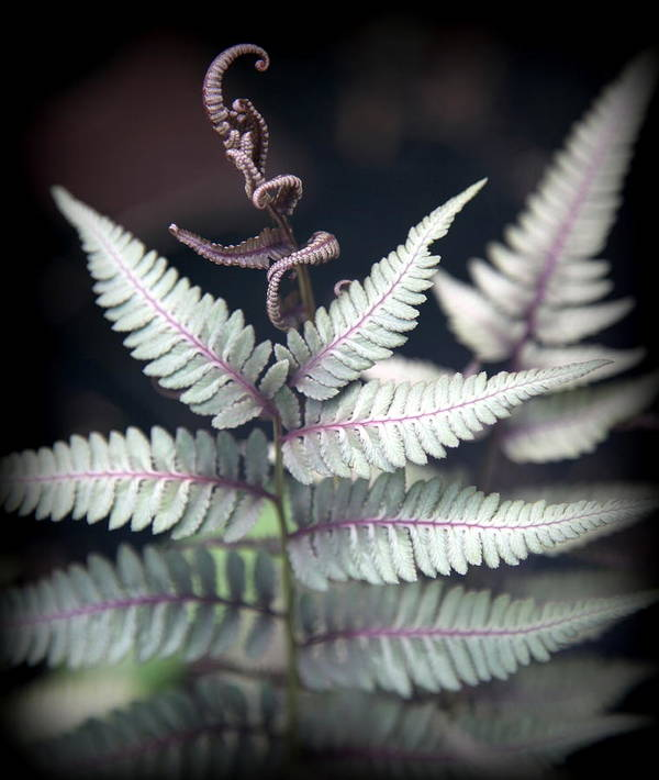 Ferns Poster featuring the photograph Magical Forest 2 by Karen Wiles