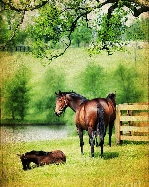 Animal Poster featuring the photograph Mom And Foal by Darren Fisher