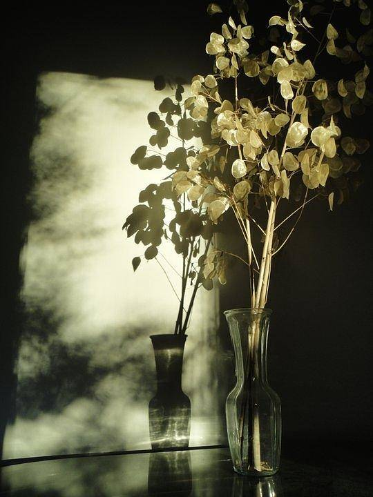 Guy Ricketts Photography Poster featuring the photograph Money Plants Really Do Cast Shadows by Guy Ricketts