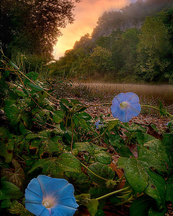 2012 Poster featuring the photograph Morning Glory by Robert Charity
