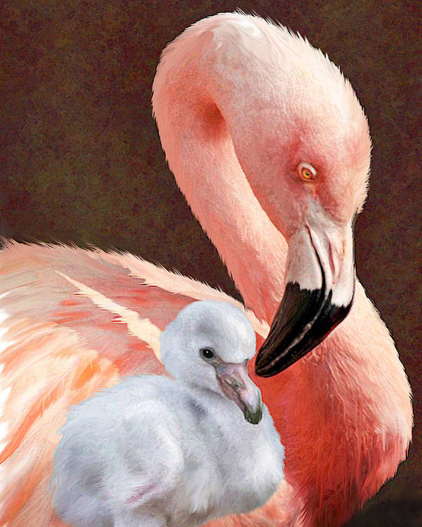 Flamingo Poster featuring the digital art Mother And Baby Flamingo by Jane Schnetlage