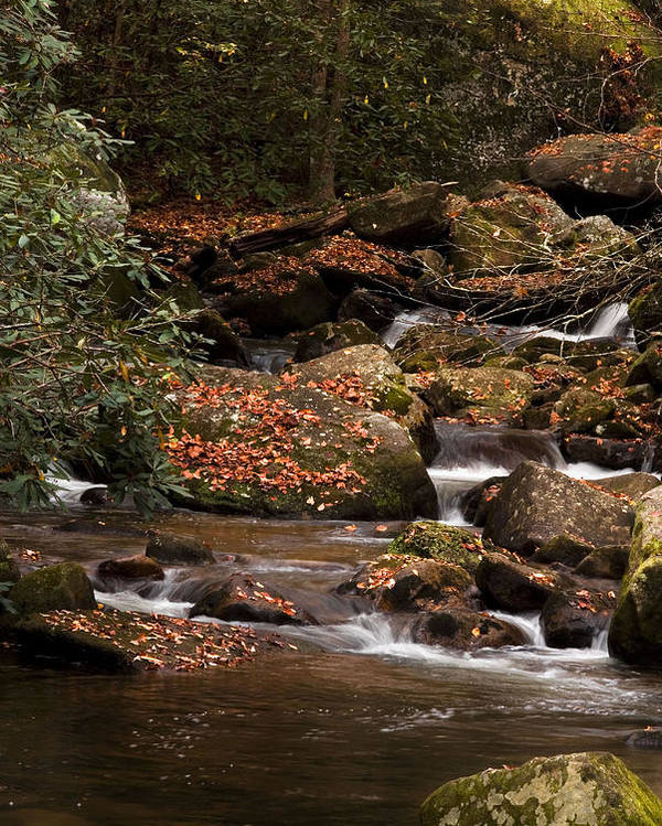 Jones Gap State Park Poster featuring the photograph Mountain Stream by Cindy Rubin