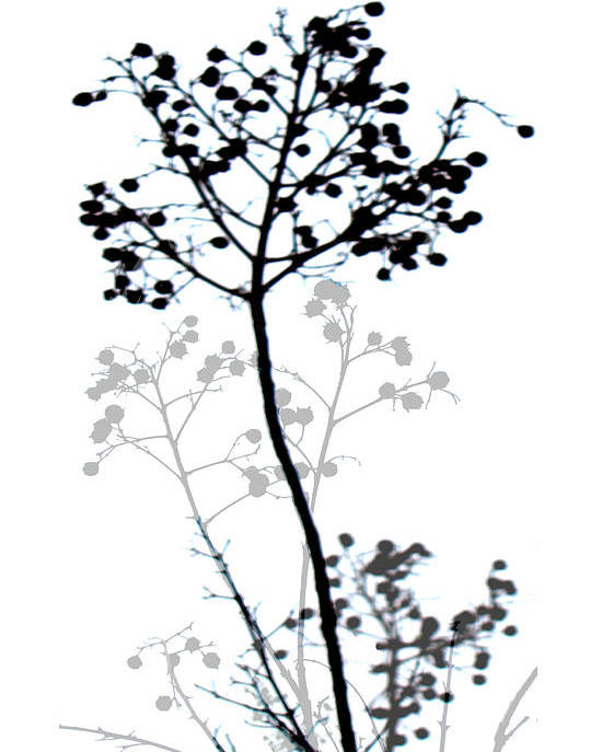 Nature Poster featuring the digital art Nature Design Black And White by Ann Powell