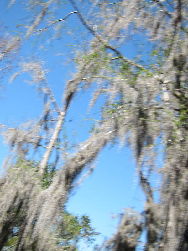 New Poster featuring the photograph New Orleans - Swamp Boat Ride - 1212127 by DC Photographer
