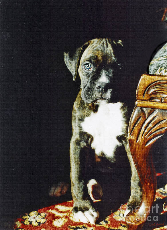 Boxer Dog Poster featuring the digital art New To The World by Judy Wood