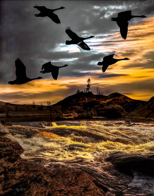 Canadian Geese Poster featuring the photograph Night Flight by Bob Orsillo