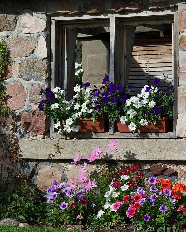 Plants Poster featuring the photograph Old Cottage Flowers by Jessica Davis