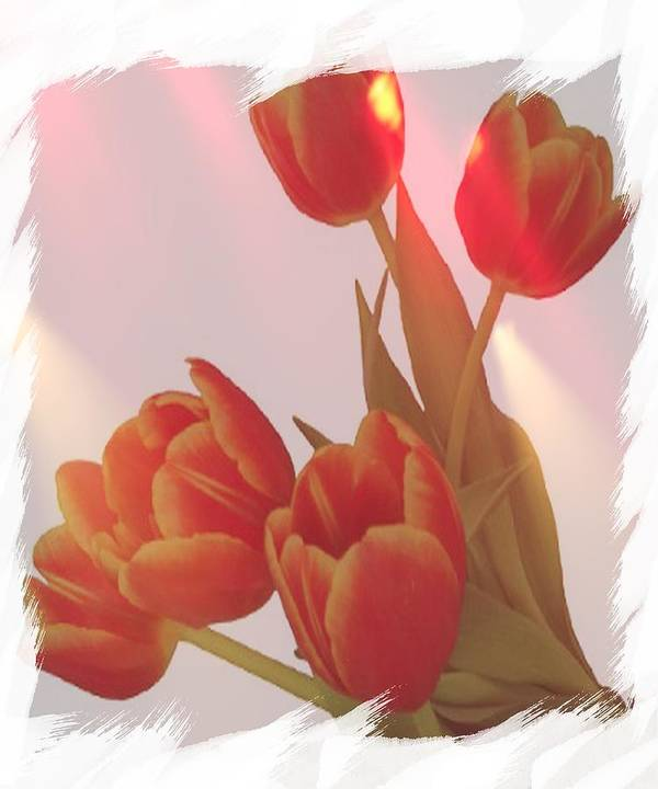 Tulips Poster featuring the photograph Orange Light by Debra Miller