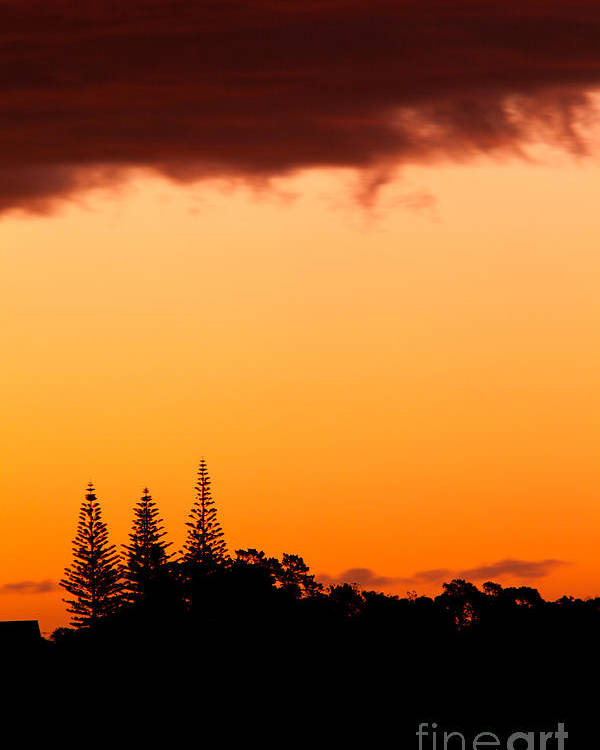 Araucaria Poster featuring the photograph Orange Sunset And Silhouettes Of Norfolk Pines by Stephan Pietzko