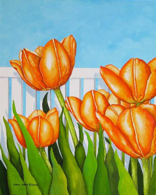 Tulips Poster featuring the painting Orange Tulips In My Garden by Carol Sabo